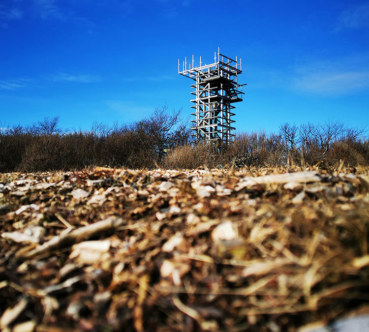 Fugletårn – Jomfruland